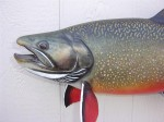 Head detail of the world record brook trout mount...